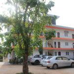 apartment garden tree