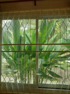 แถบความปลอดภัยของหน้าต่าง ด้านหลังหน้าต่างเราเห็นสไตล์สวนเกาะสมุย